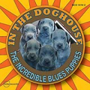 Incredible Blues Puppies
